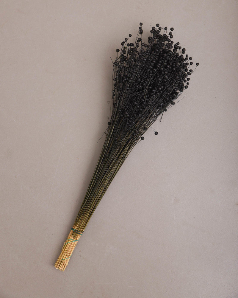 Dried Flowers Black - Flax Grass