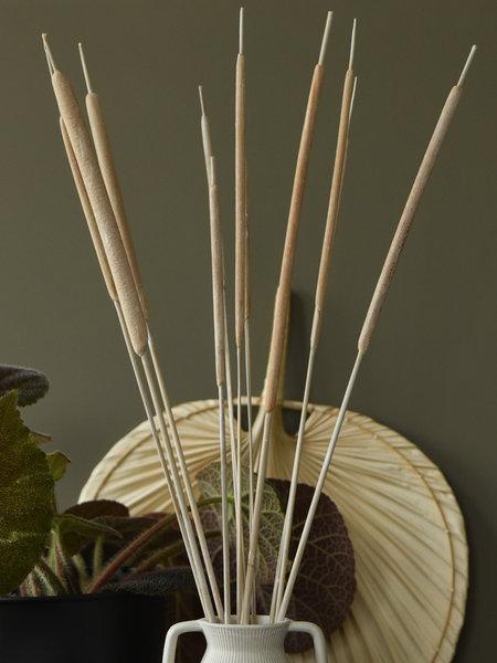 Dried Flowers Beige - Typha Reed (SET OF 10)