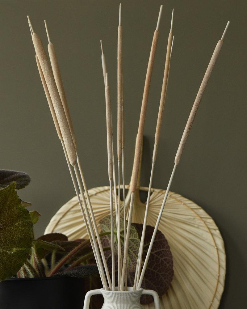 Dried Beige Typha Reed Deco (SET OF 10)