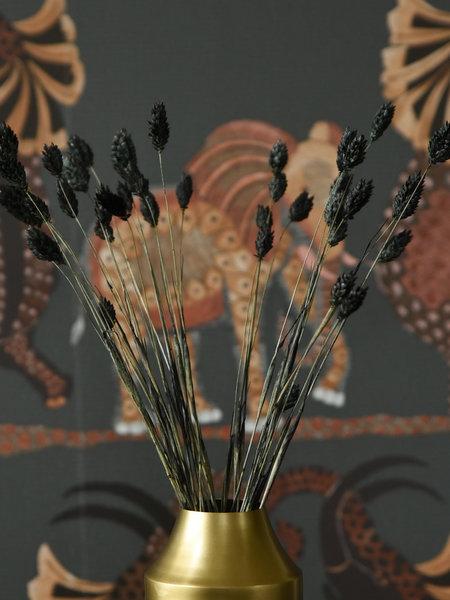 B&B Trend Company Dried Flowers Black - Phalaris