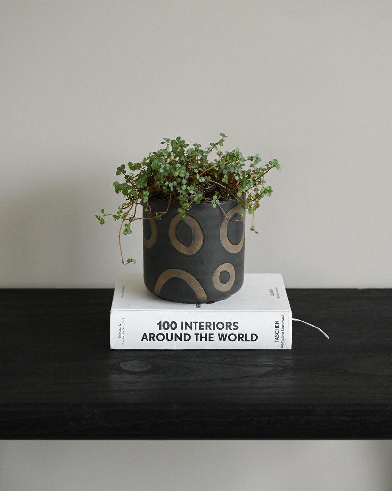 Planter Avo