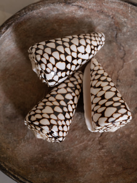 ByBazz Cone Shell Brown (SET OF 3)