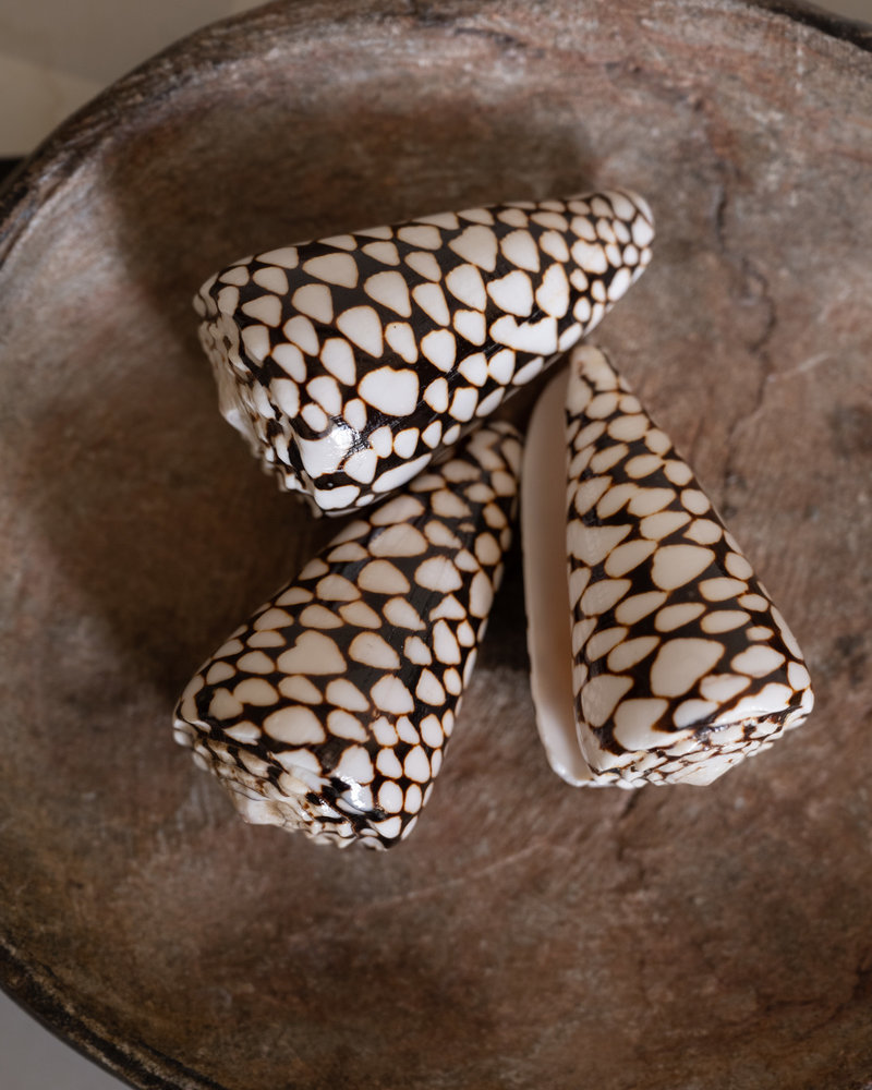 Cone Shell Brown (SET OF 3)