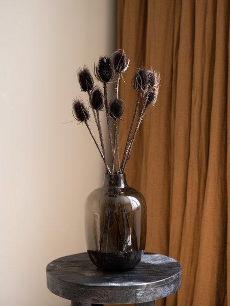 B&B Trend Company Dried Flowers Black - Cardi Stella