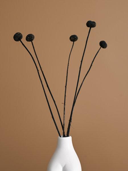 B&B Trend Company Dried Flowers Black - Craspedia (SET OF 5)