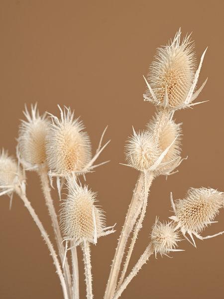 B&B Trend Company Dried Flowers White - Cardi Stella