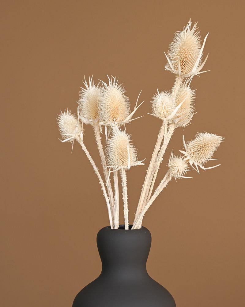 Dried Flowers White - Cardi Stella