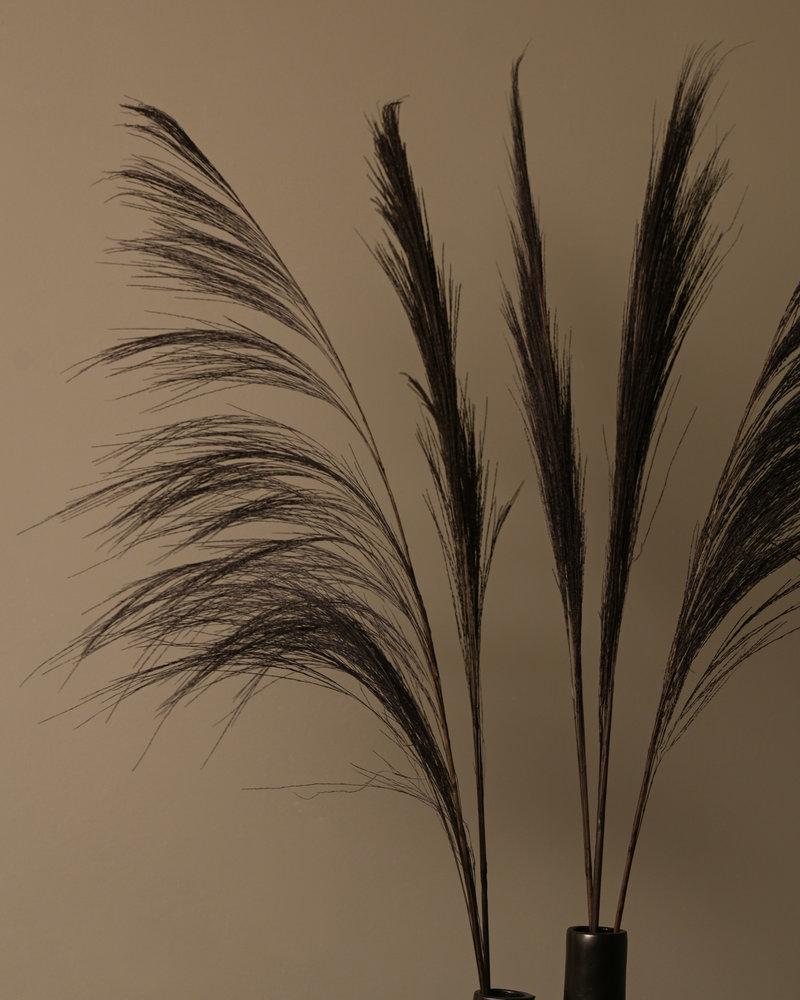 Dried Flowers Black - Broom