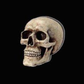 Crâne - Beige - résine
