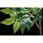 Acacia tak - synthetisch