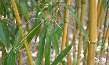 De 5 voordelen van bamboe