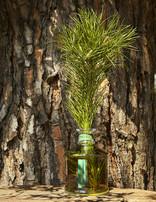 Erbario Toscano Home Fragrance Diffuser Luxury Tuscan Pine 250 ml