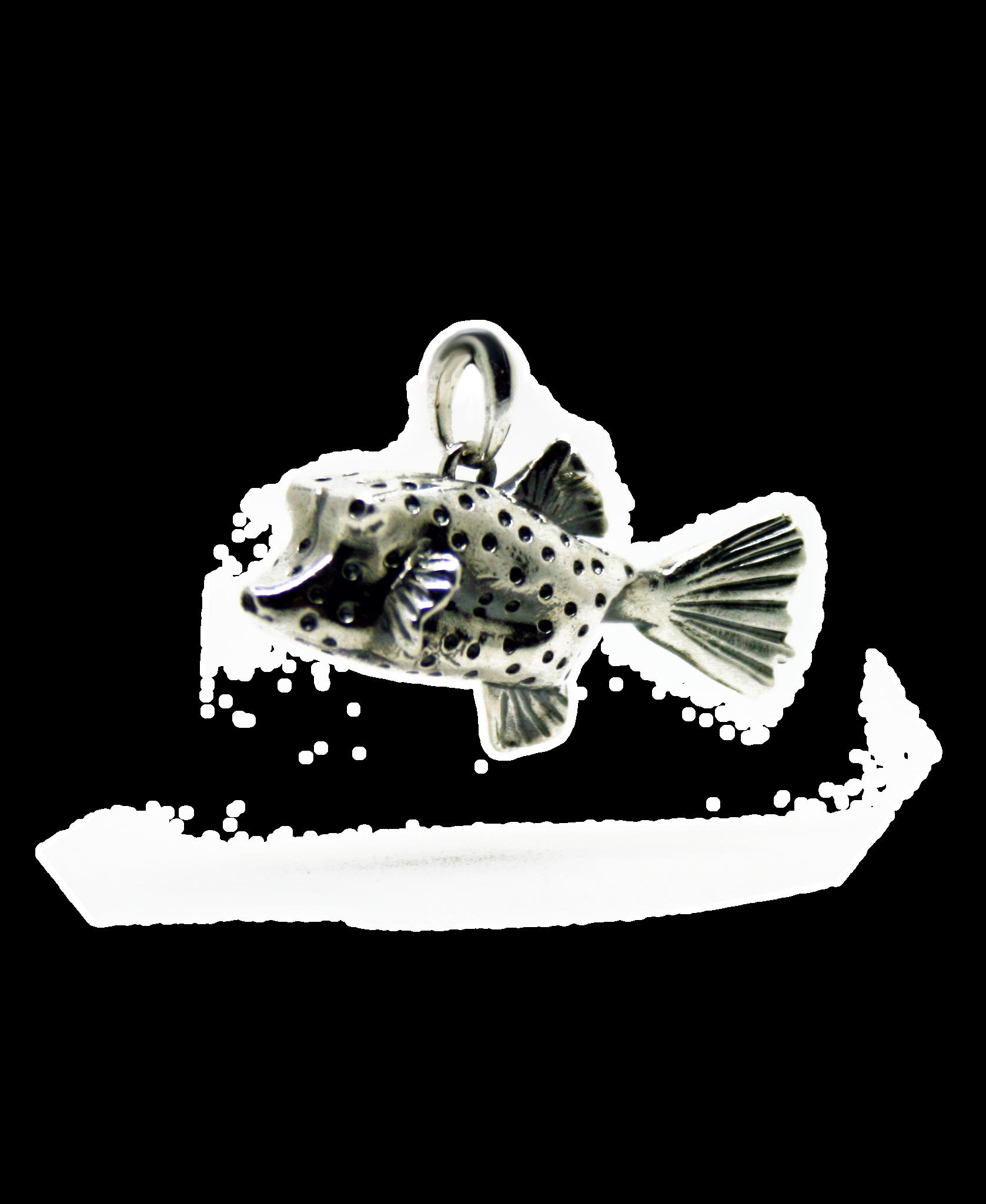Box Fish-1