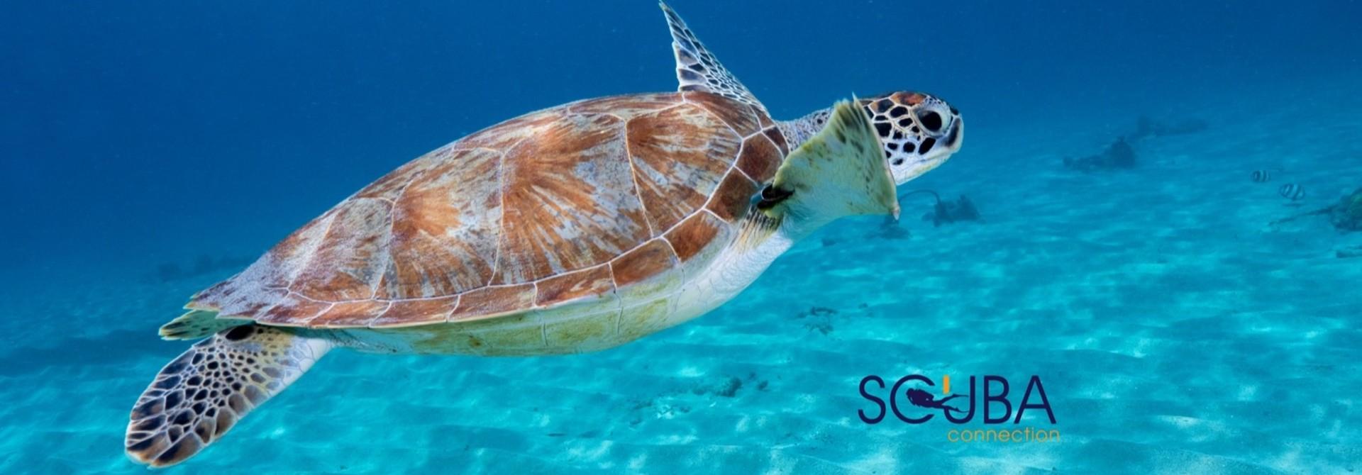 Online Snorkelwinkel