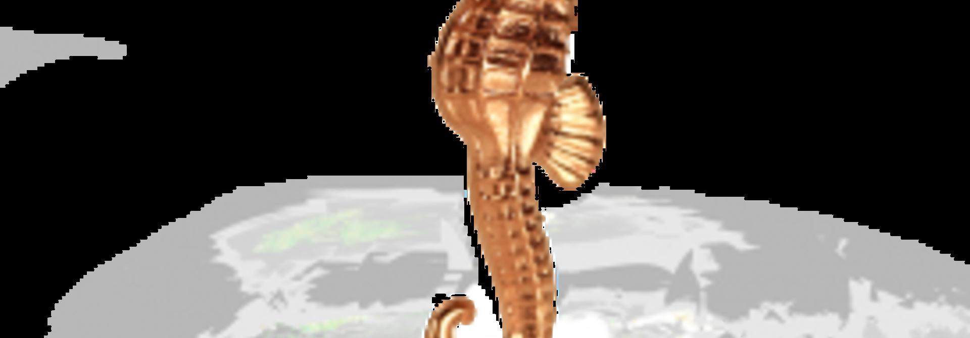 Seahorse Roze
