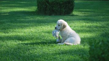 Speelgoed voor je puppy