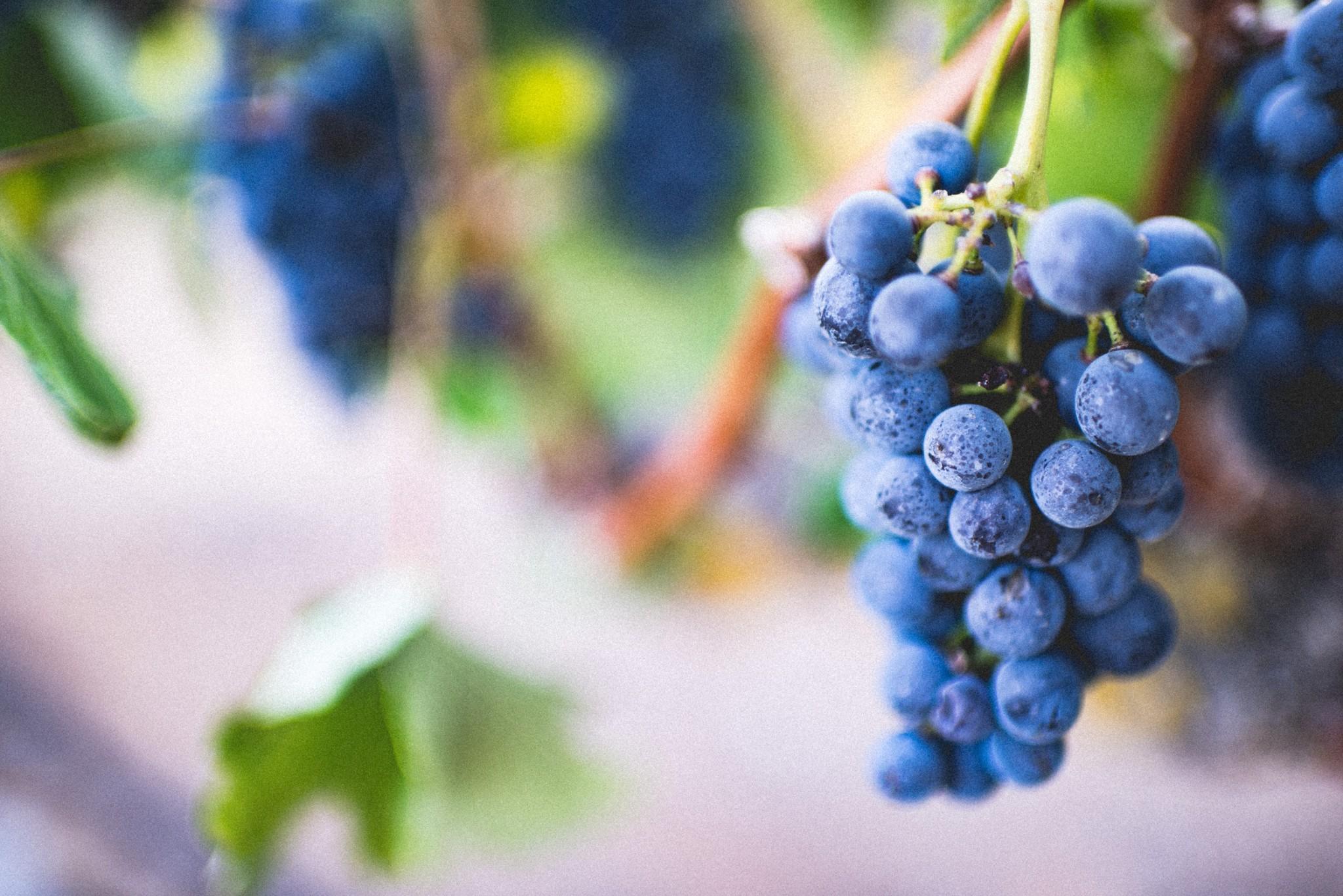 Wat is wijn nou eigenlijk?
