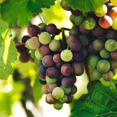 Wijnen tot €10,-