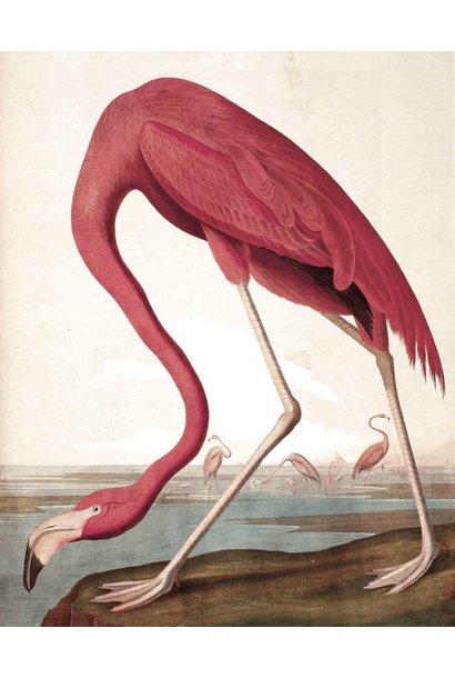 Behang paneel Flamingo 142,5x180cm