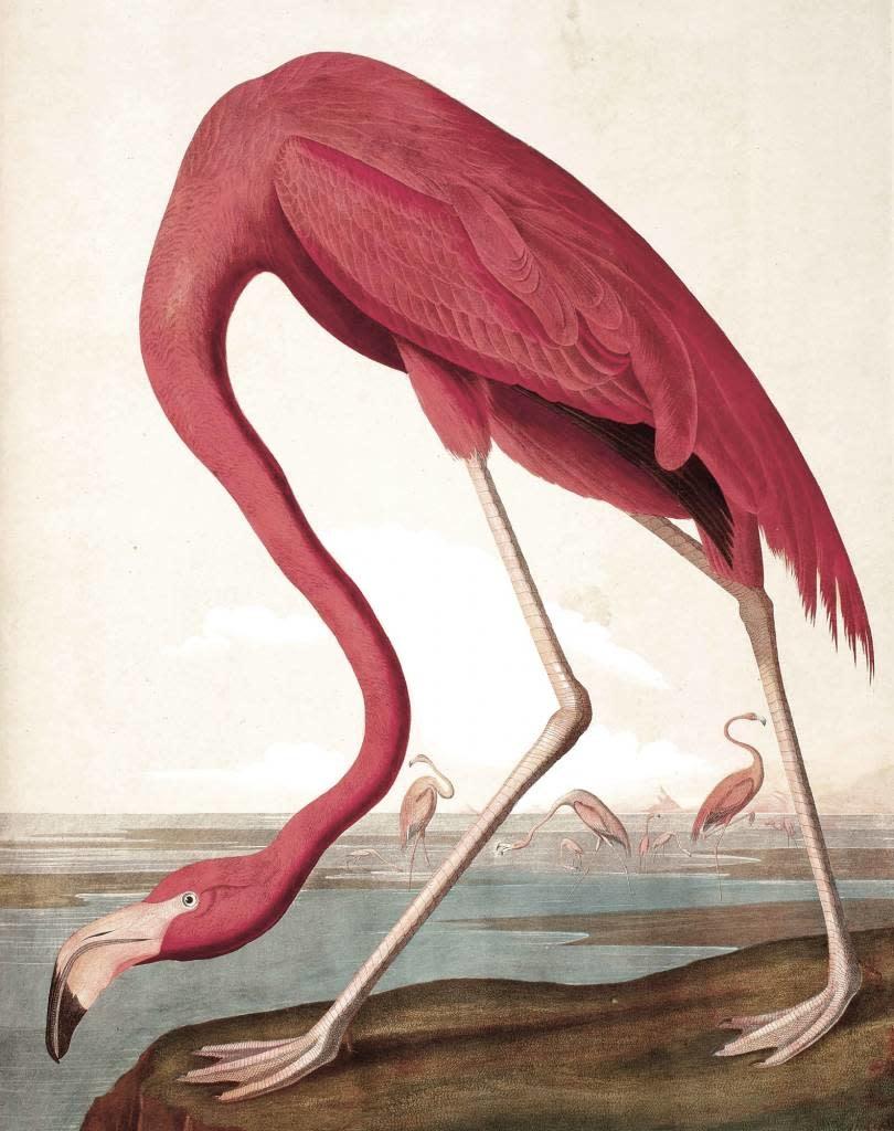 Behang paneel Flamingo 142,5x180cm-1