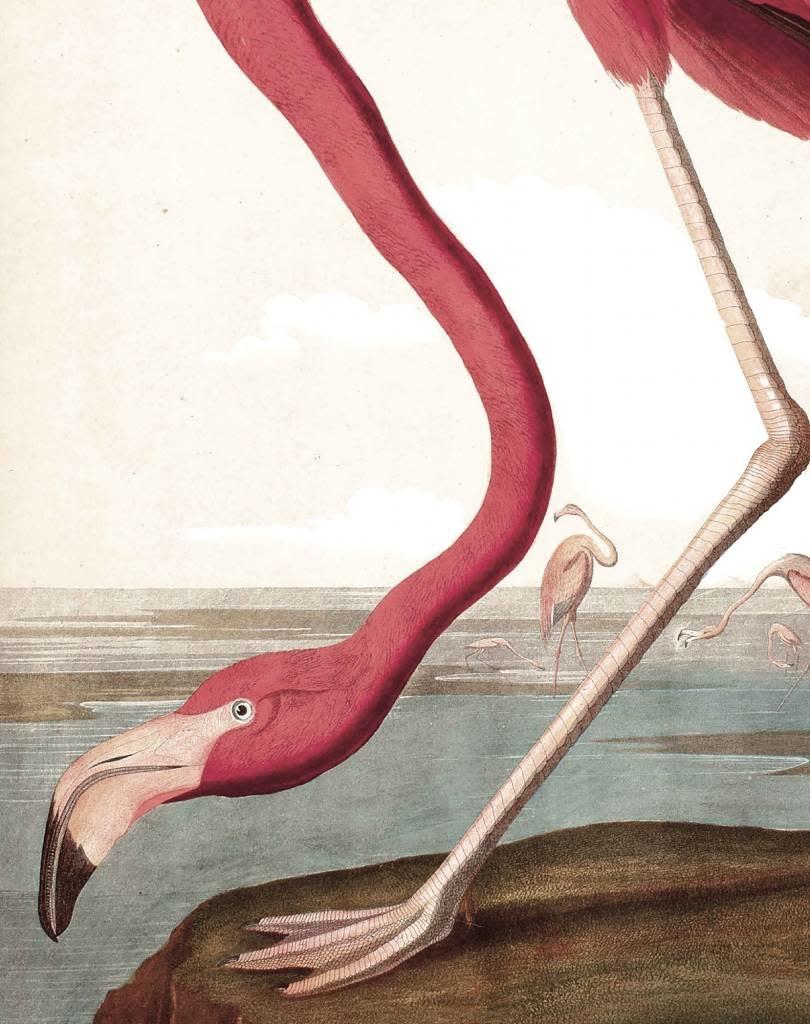 Behang paneel Flamingo 142,5x180cm-4