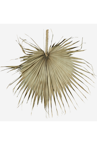 Wanddecoratie palm leaves 60cm Natural