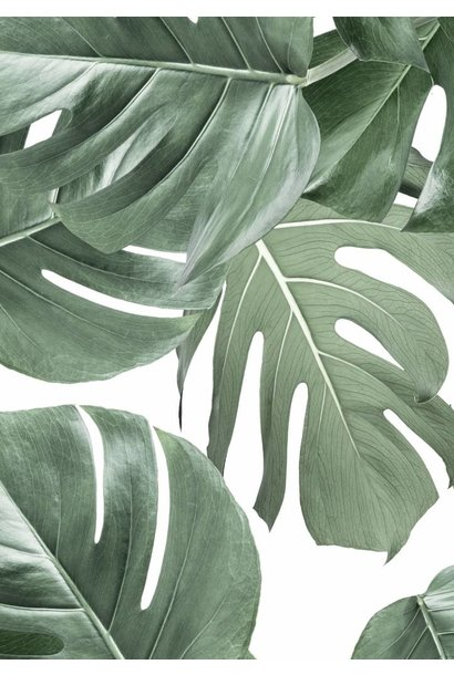 Behang 2 strook Botanical Monstera 97.4x280cm