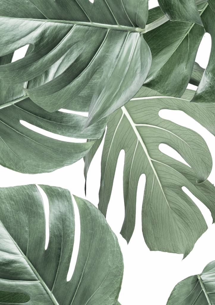 Behang 2 strook Botanical Monstera 97.4x280cm-1