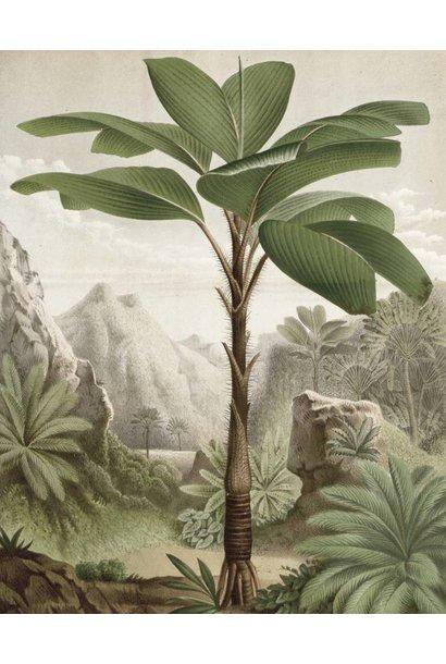 Behang Banana Tree 142.5x180cm