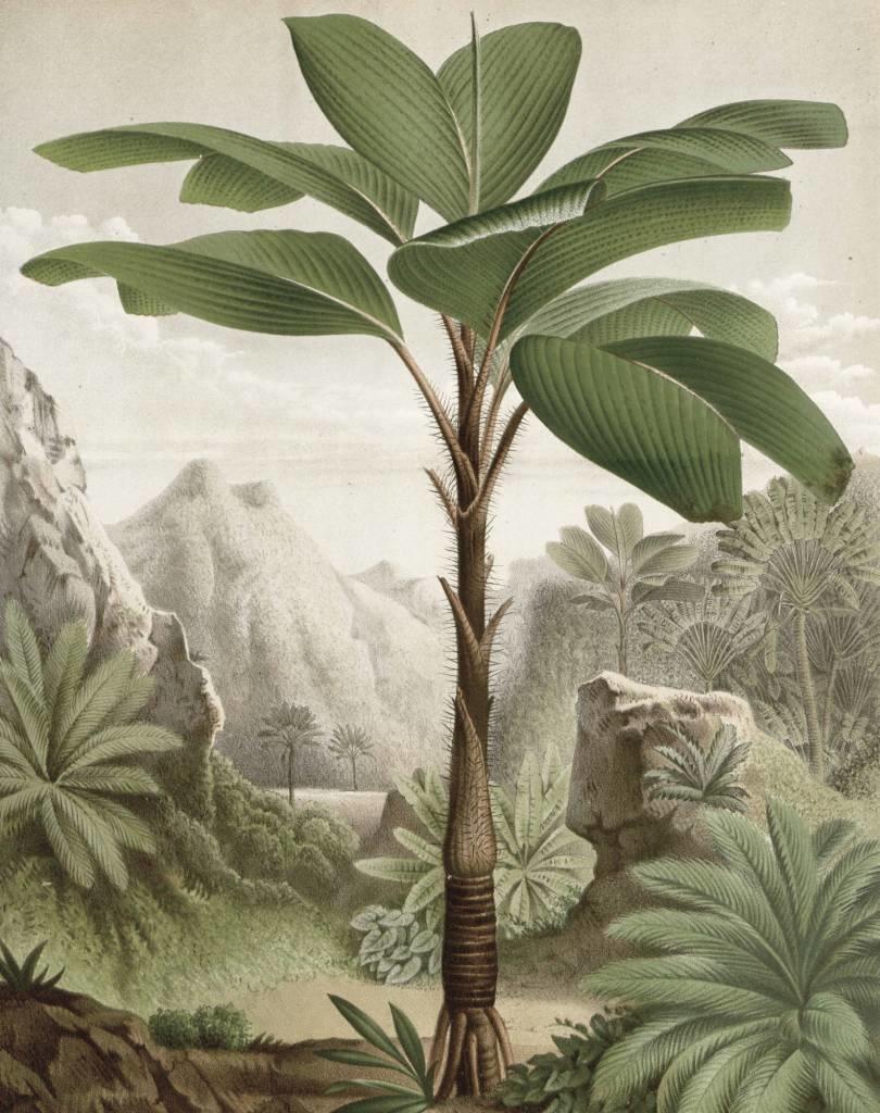 Behang Banana Tree 142.5x180cm-1