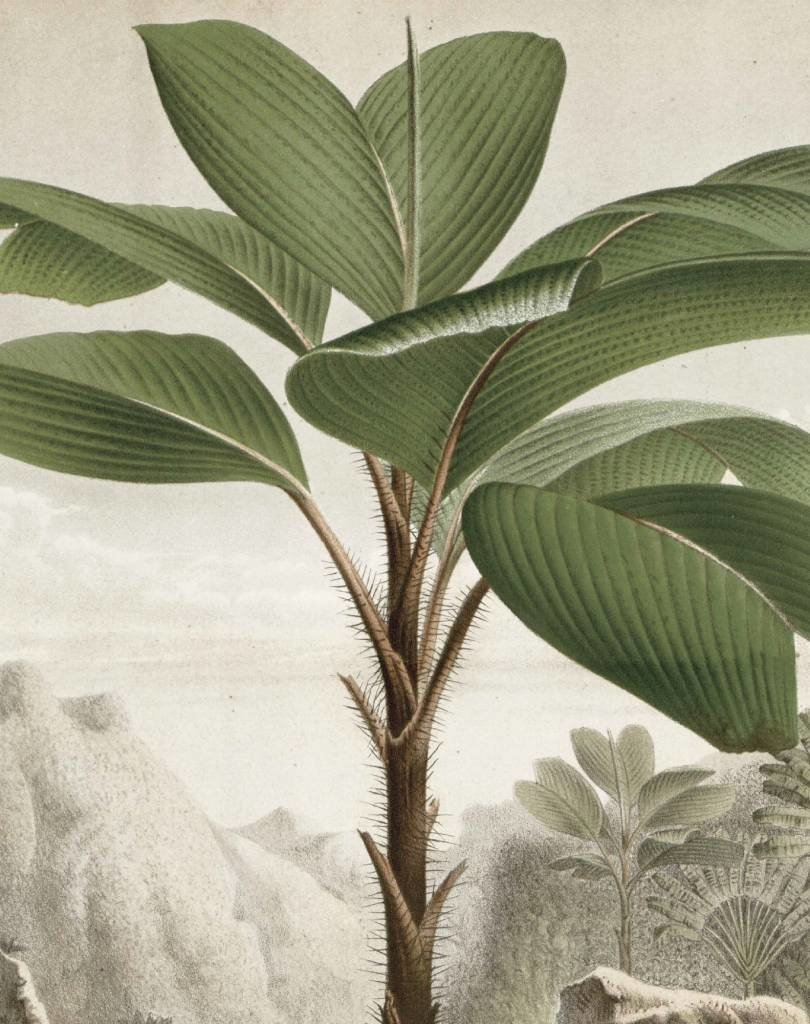 Behang Banana Tree 142.5x180cm-4
