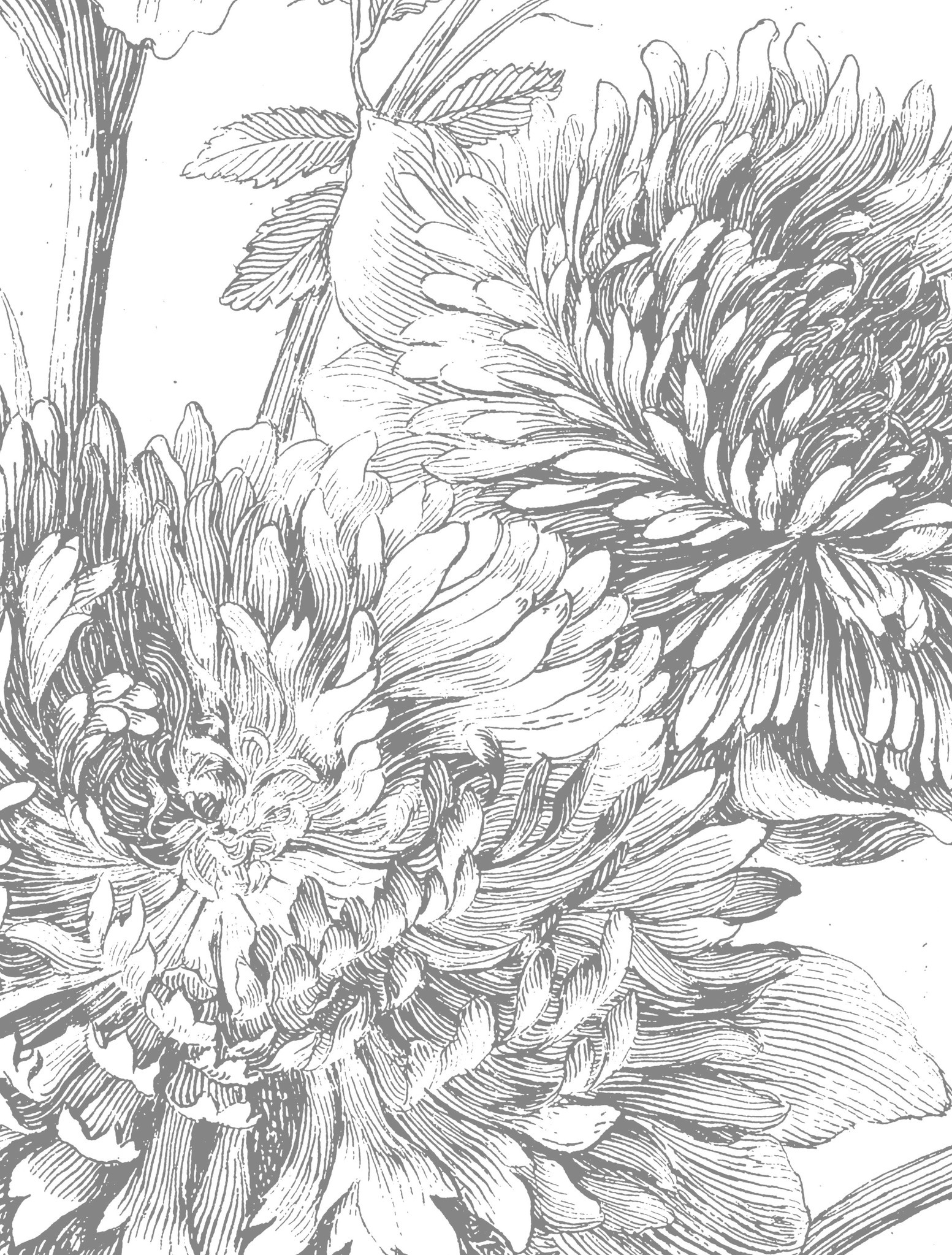 Behang Engraved Flowers Round Ø190cm-4