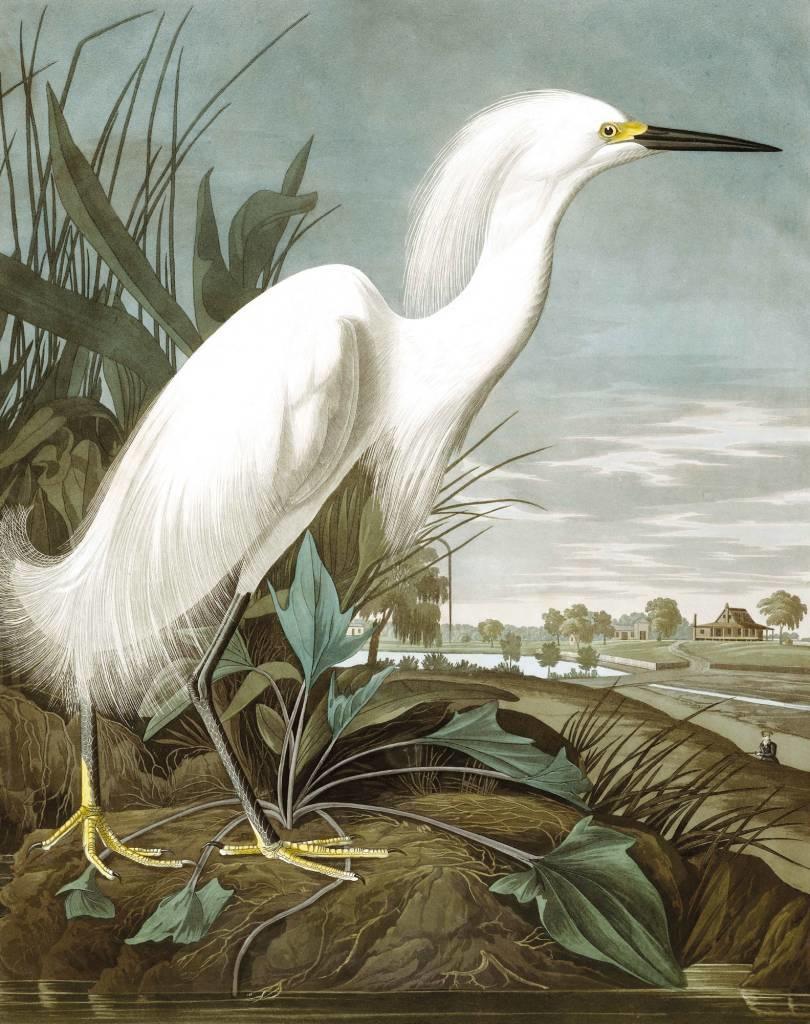 Behang Snowy Heron 142.5x180cm-1