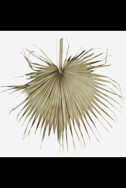 Wanddecoratie palm leaf 80cm Natural