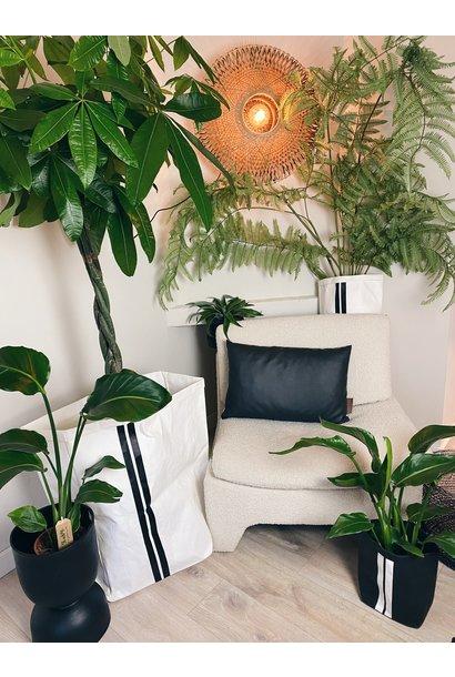 Plant Pachira 27cm pot 160cm hoog