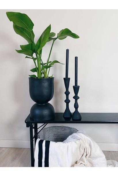 Plant strelitzia 17cm pot 65cm hoog
