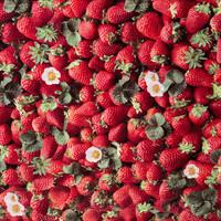 Wachstuch Erdbeeren