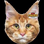 Pet Faces Pet Faces Maine Coon Cat