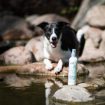 Greenfields Greenfields Droogshampoo voor Honden - Spray & Go Shampoo 250 ml