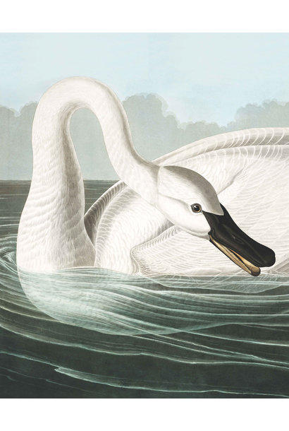 Behangpaneel Trumpeter Swan