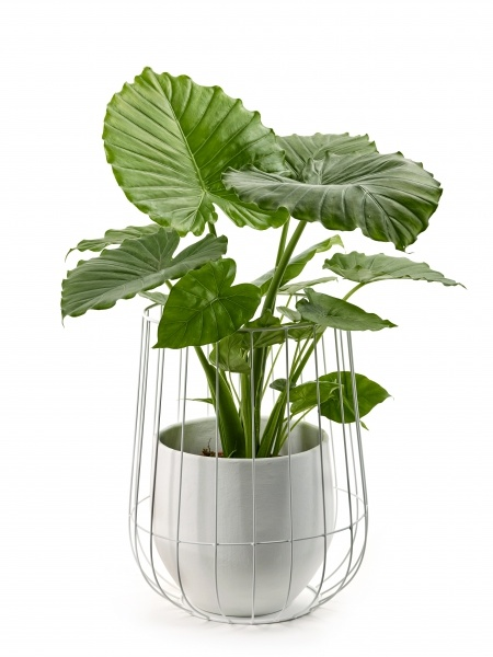Pot in a Cage-2