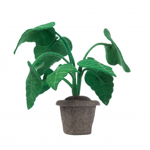 Kids Depot Alocasia plant