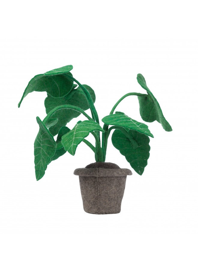 Kids Depot - Alocasia plant