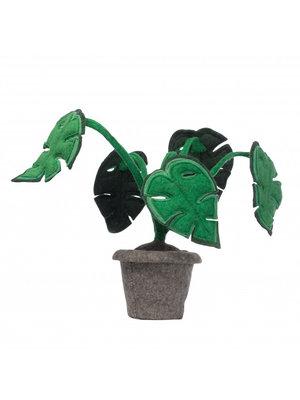 Kids Depot Monstera plant