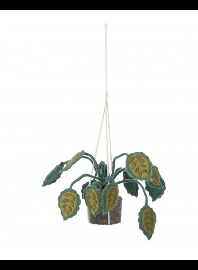 Hangplant Big Leaves