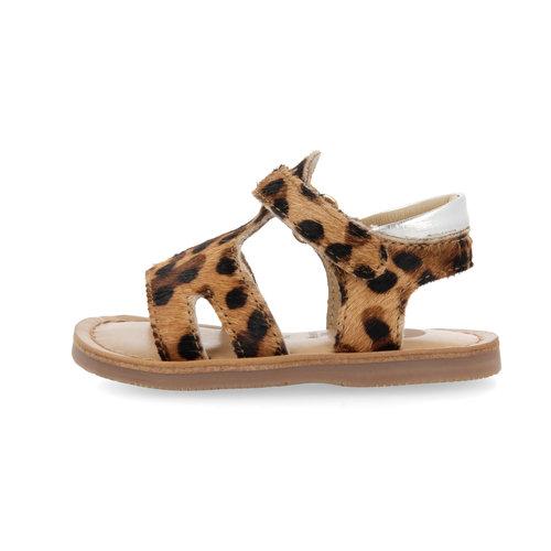 Gioseppo Roseville - Leopardo