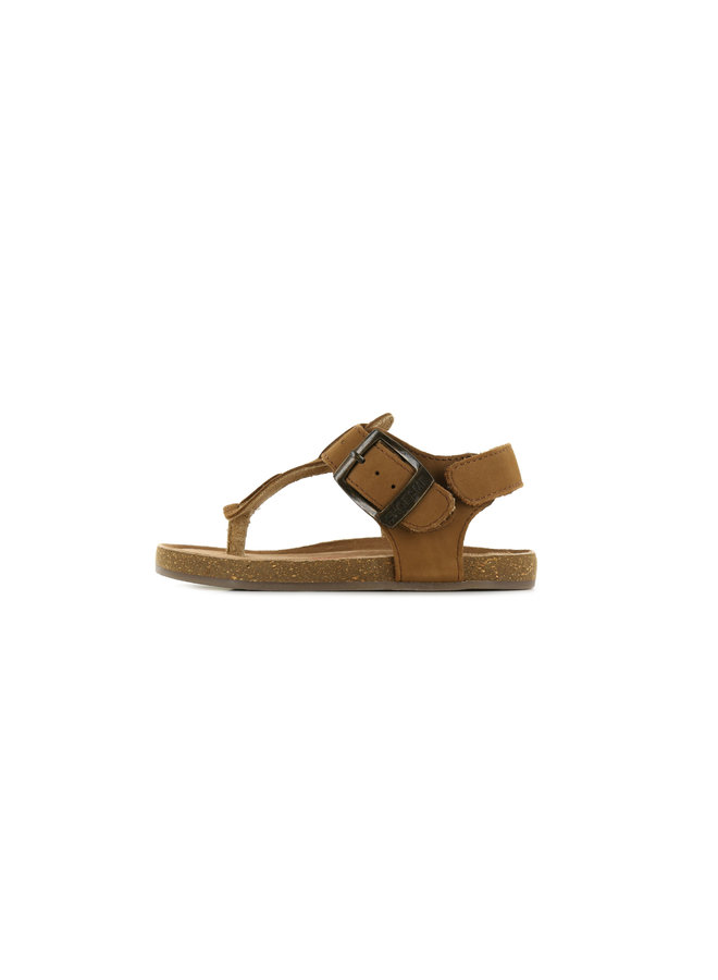 IC21S006-C - Brown