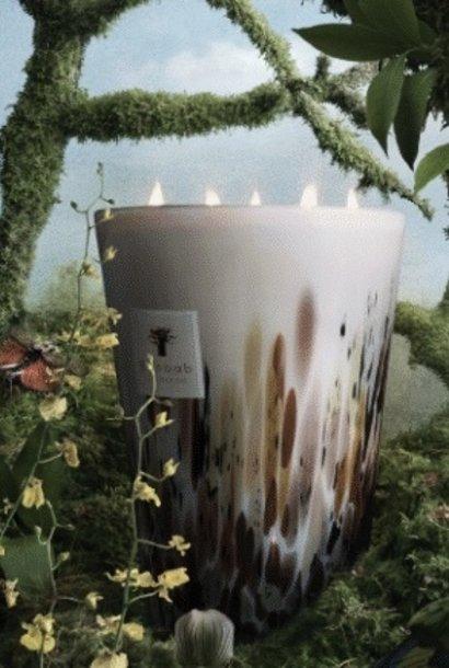 rainforest mayumbe