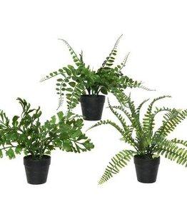 KaemingkS9 Fern Plants In Pots