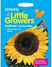 Unwins Little Growers - Sunflower Sunshine Giant